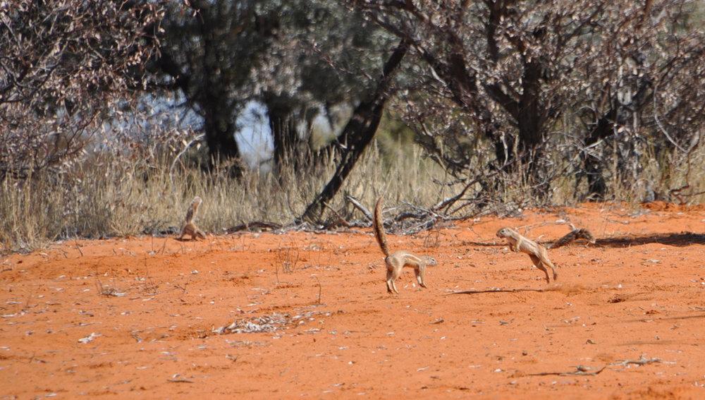 Hunt Namibia Kalahari 2OutPost105.JPG