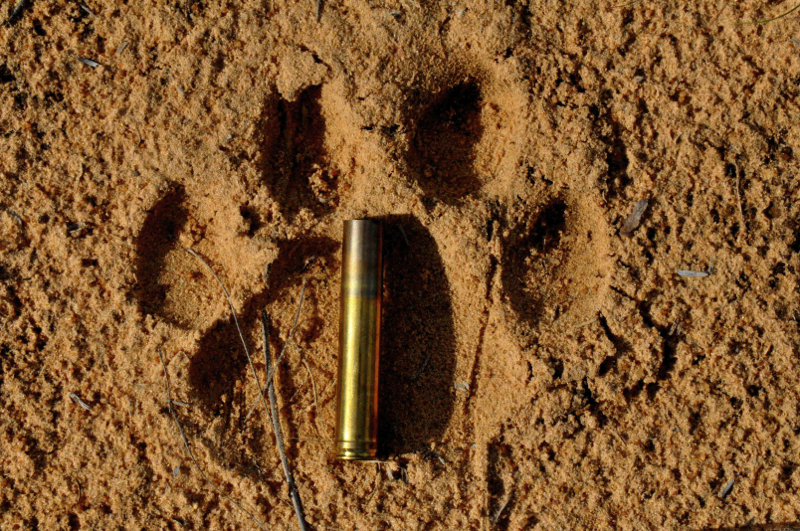 Hunt Sout Africa Kalahari Lion hunting102.jpg
