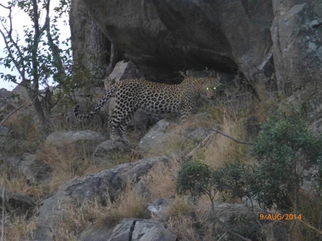 Hunt South Africa Letaba River40.jpg