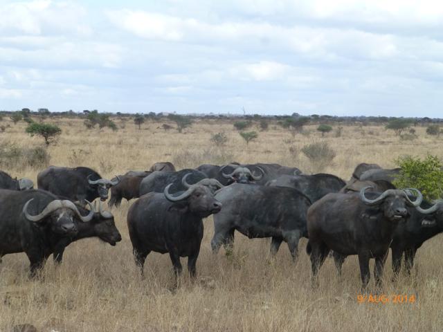 Hunt South Africa Letaba River35.jpg