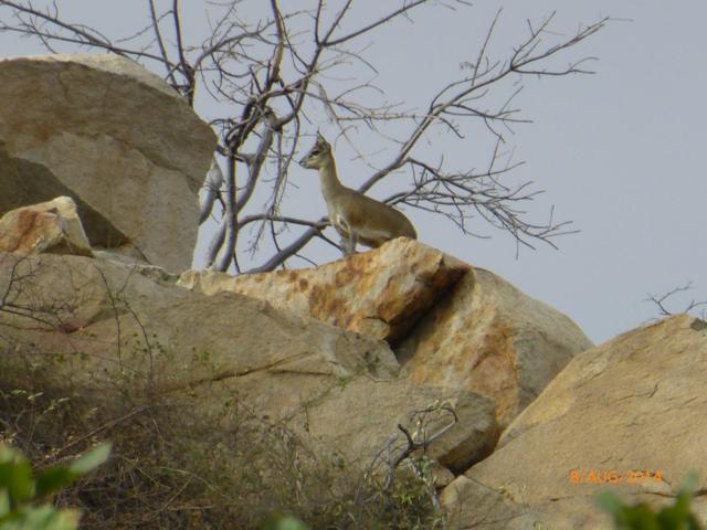 Hunt South Africa Letaba River30.jpg