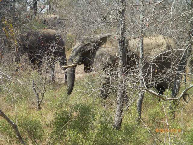 Hunt South Africa Letaba River25.jpg