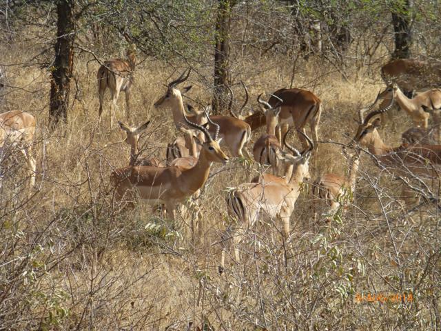 Hunt South Africa Letaba River24.jpg