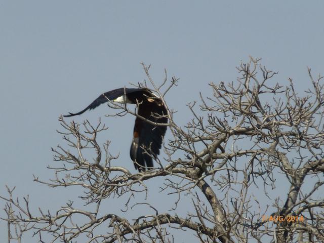 Hunt South Africa Letaba River22.jpg