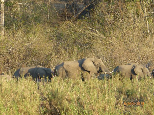 Hunt South Africa Letaba River21.jpg