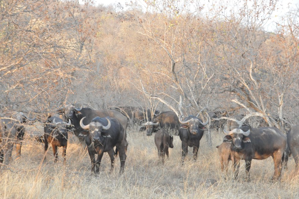 Hunt South Africa Letaba River2.jpg
