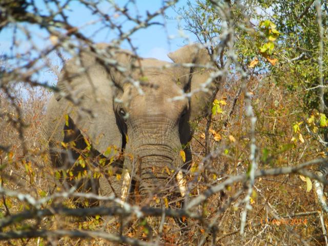 Hunt South Africa Letaba River 10.JPG