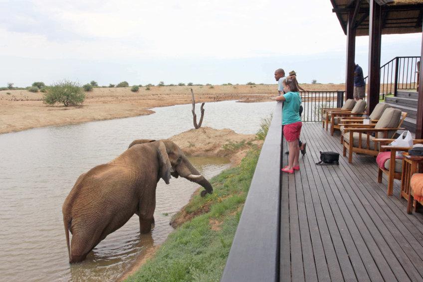 erindi-elephant-meeting2.jpg