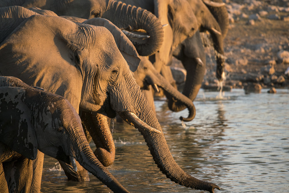 ERINDIPRIVATE GAME RESERVE - Experience the Big 5 in Namibia!