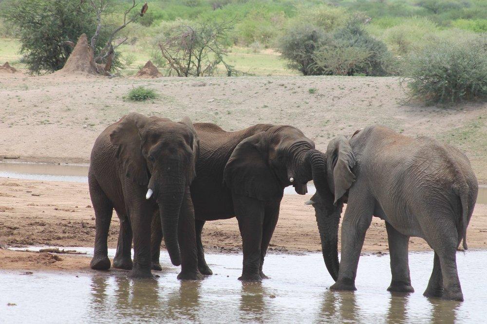 erindi-elephant-meeting.jpg