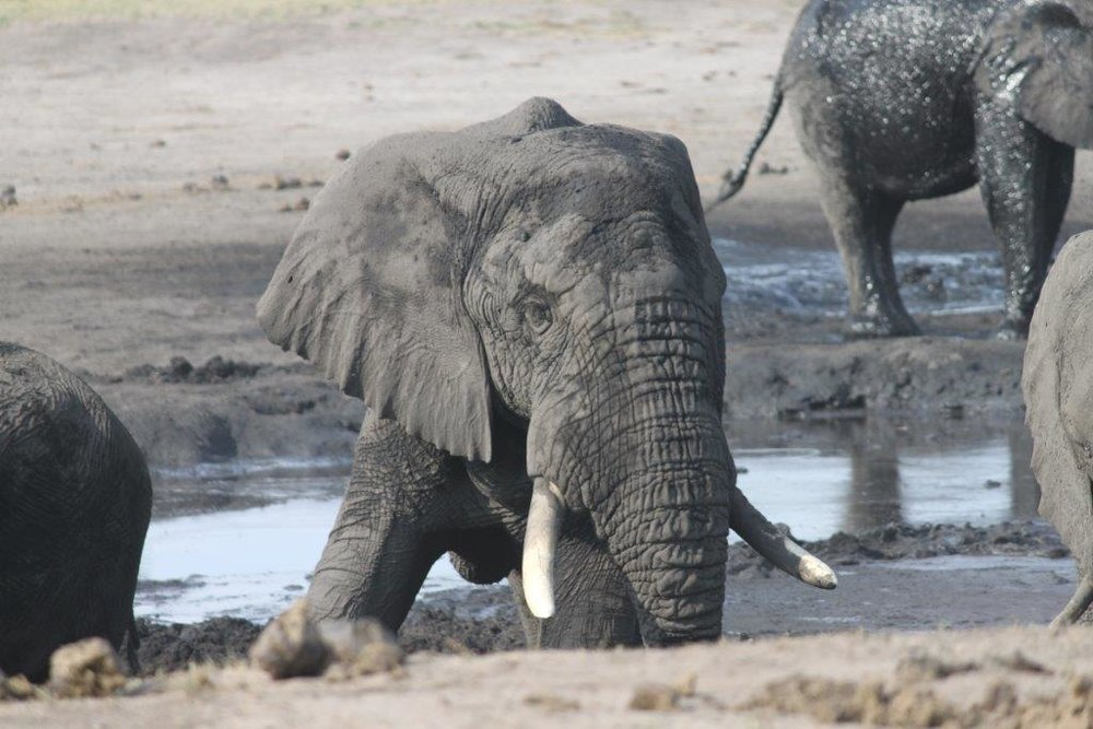 elephant (11).jpg