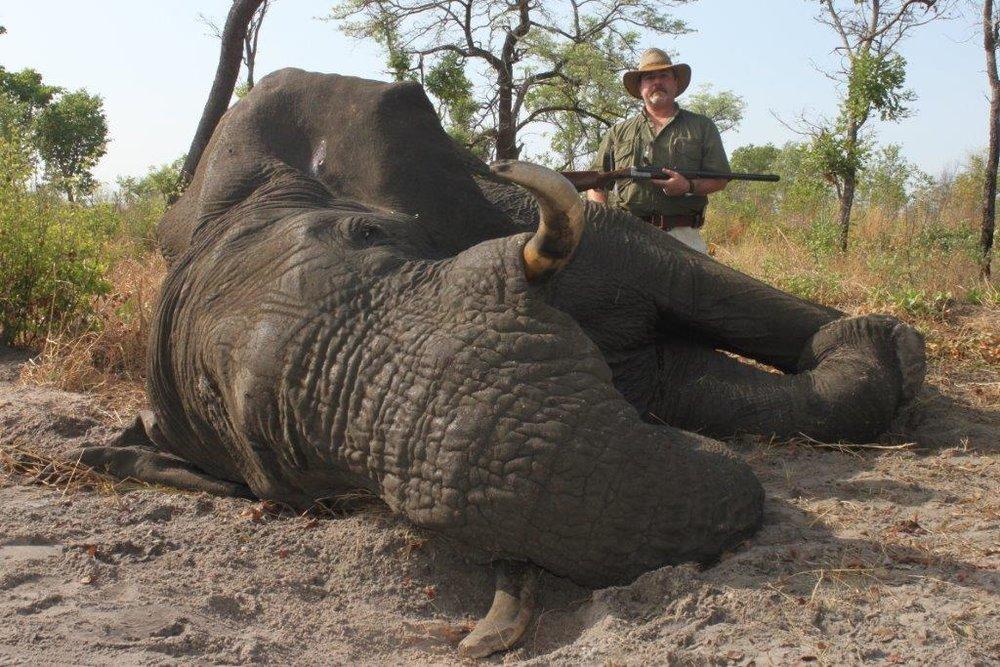 elephant (12).jpg