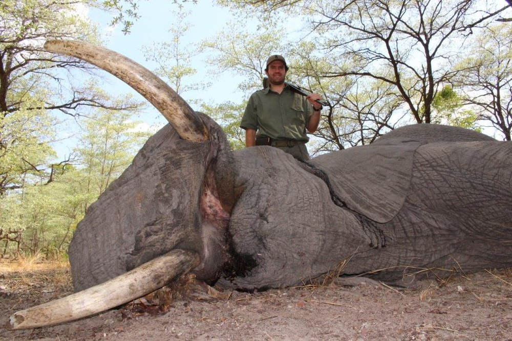 elephant (15).jpg