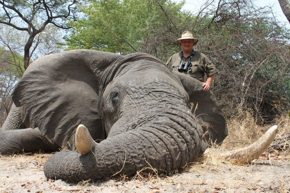 elephant (21).jpg