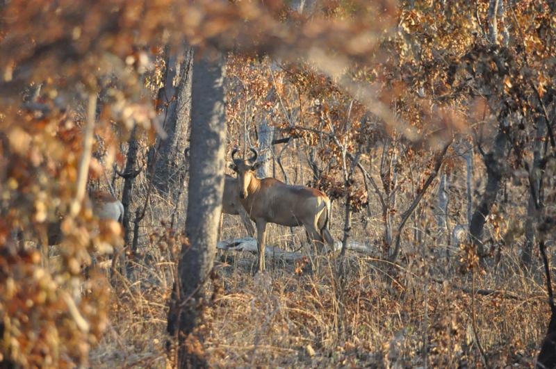 Tanzania hunting40.JPG