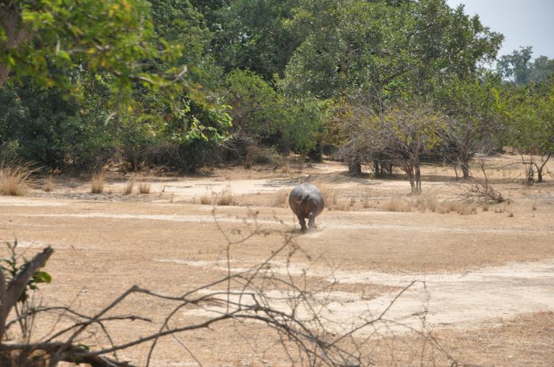 Tanzania hunting38.JPG