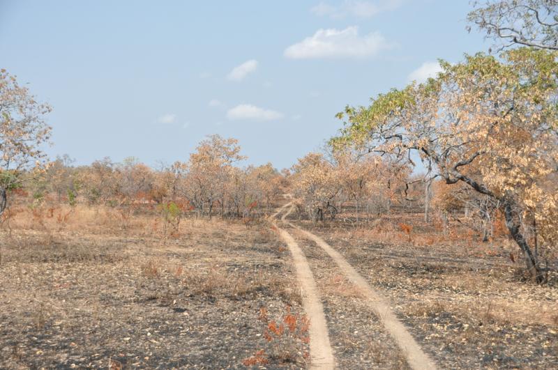 Tanzania hunting34.JPG