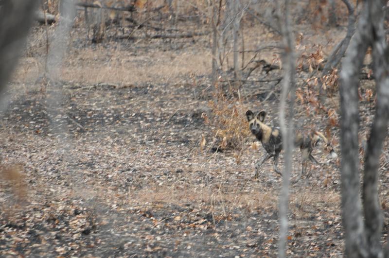 Tanzania hunting33.JPG
