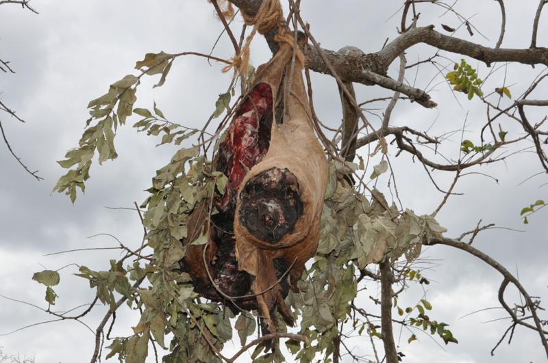 Tanzania hunting32.JPG