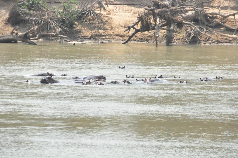 Tanzania hunting26.JPG