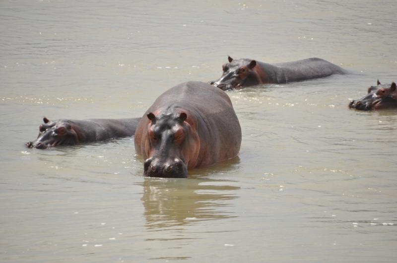 Tanzania hunting23.JPG