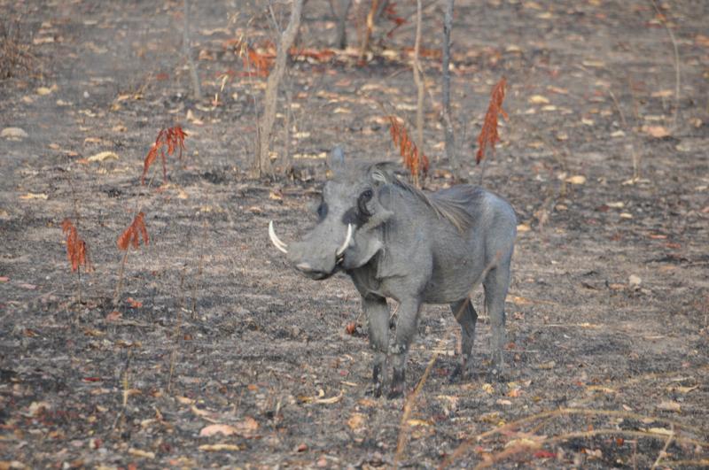 Tanzania hunting13.JPG