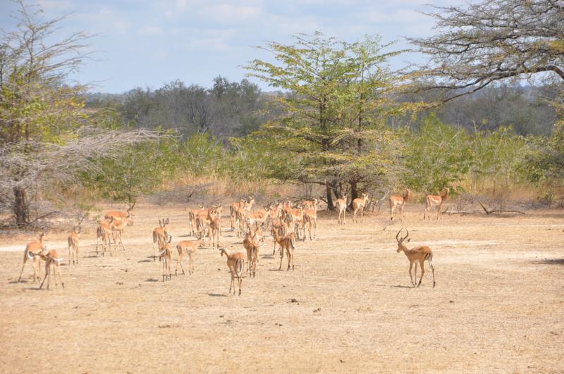 Tanzania hunting12.JPG