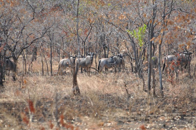Tanzania hunting11.JPG