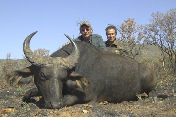buffalo15.jpg