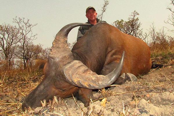 buffalo22.jpg