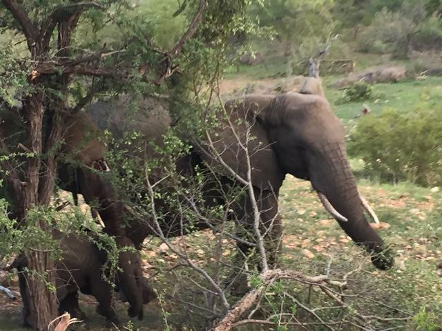 Hunt in Africa 130.jpg