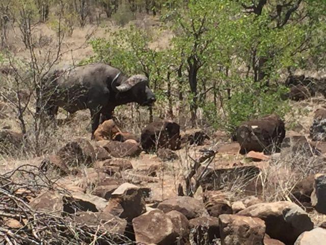 Hunt in Africa 128.jpg