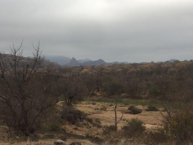 Hunt in Africa 83.jpg