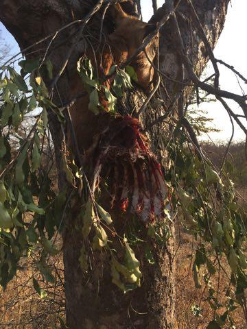 Hunt in Africa 81.jpg