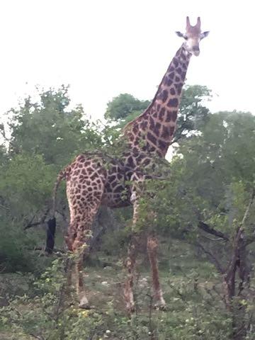 Hunt in Africa 126.jpg