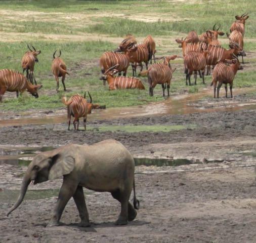 Hunt in Africa 5.jpg