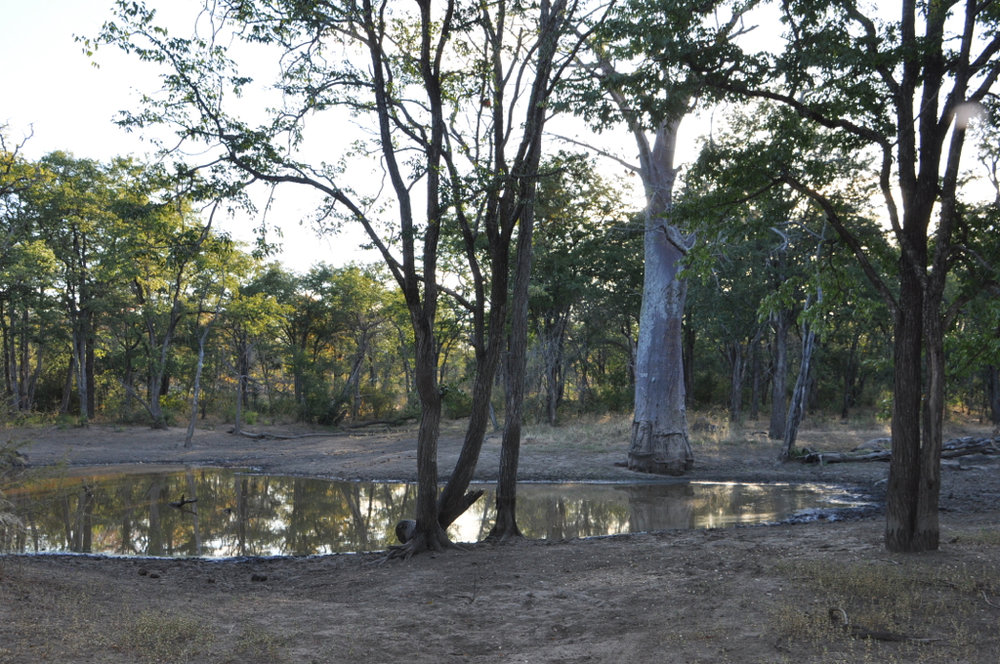 Hunt Zimabawe SE114.JPG