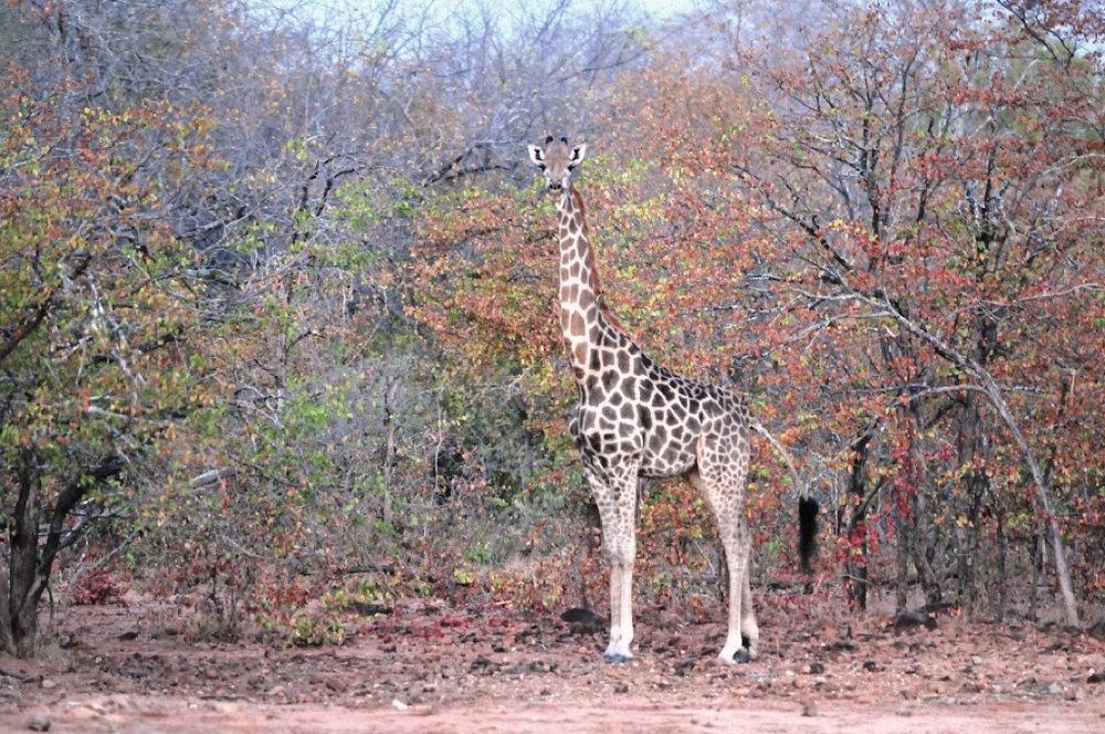Hunt Zimabawe SE103.JPG