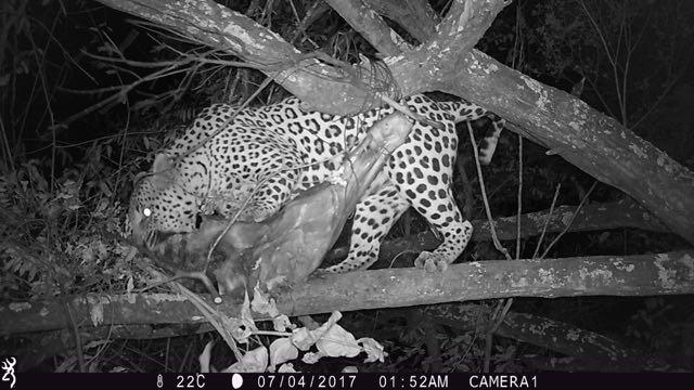 Hunt in Africa 12.jpg