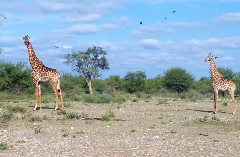 SA Limpopo Camp2.jpg