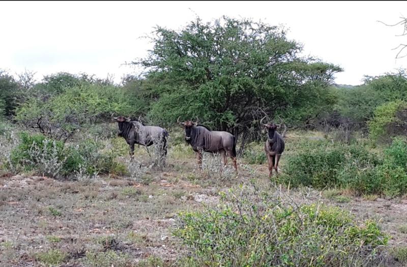 SA Limpopo Camp1.jpg
