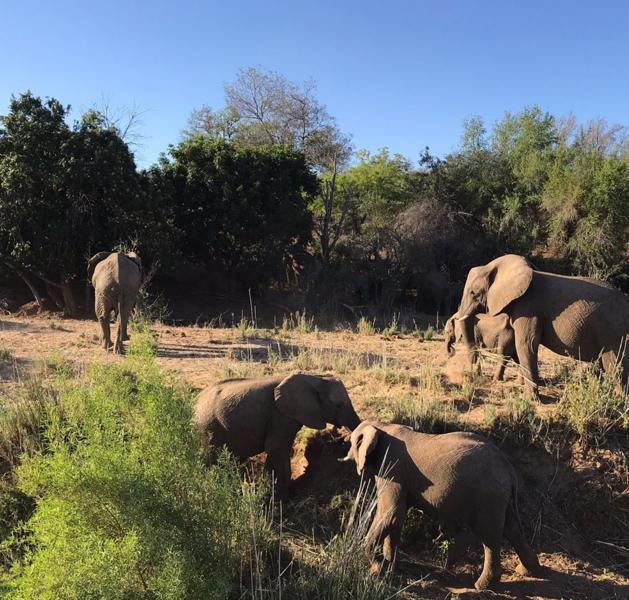 Elephant River Safari25.jpg