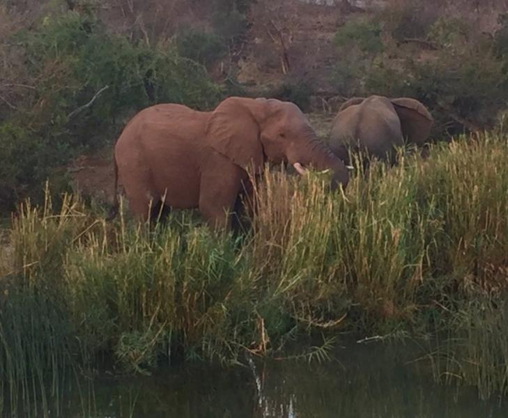 Elephant River Safari21.jpg
