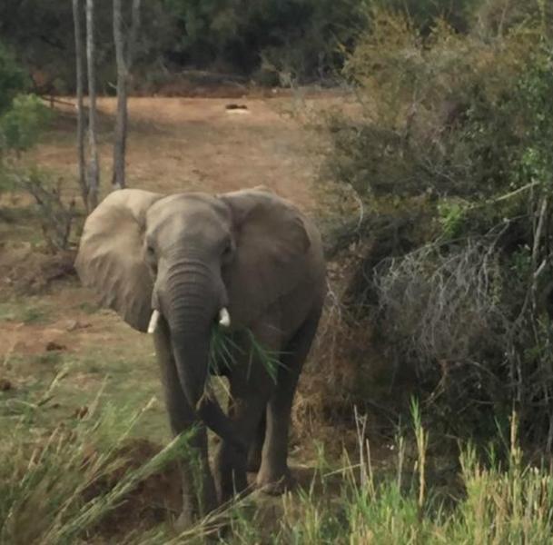 Elephant River Safari15.jpg