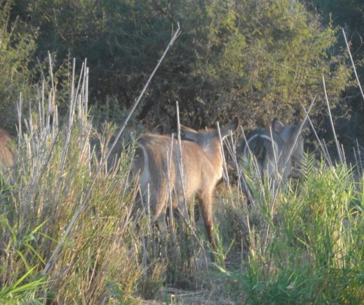 Elephant River Safari6.jpg