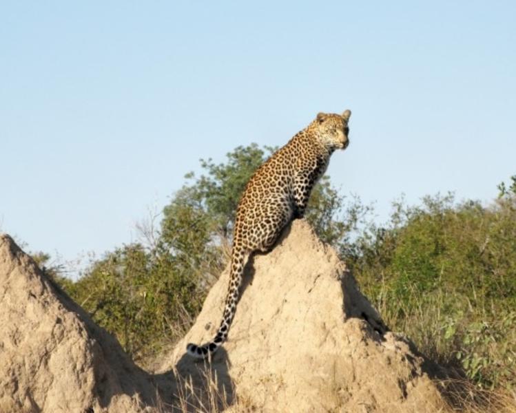 Zim Limpopo Camp10.jpg