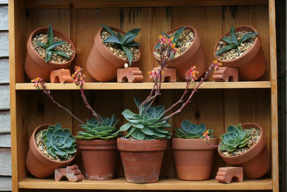 Les conseils de la team AIDAN pour bien entretenir ses cactus et les garder plus longtemps.