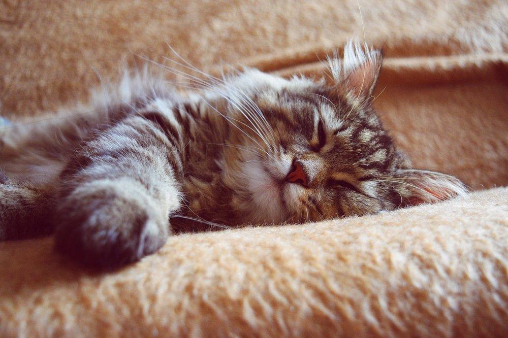 sieste-chat