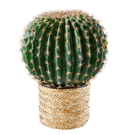 Maison du Monde: Cactus artificiel.