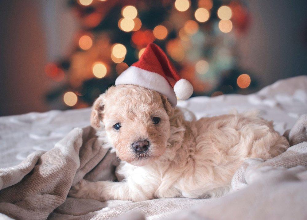 rhaul-v-alva-christmas-unsplash.jpg